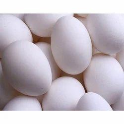 poultry egg