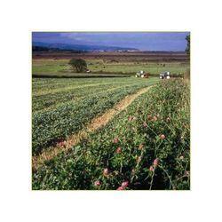 organic farming service