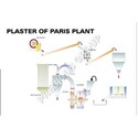 Plaster of Paris Plant