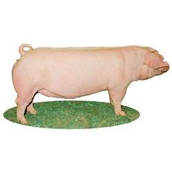 Pig Fattener Feed