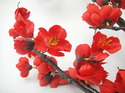 Red Cherry Blossom Flowers Branch