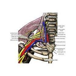 Medical Illustrations Service