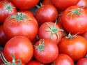 Tomato Products, Processing, Dehydration Project Reports