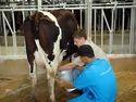 Dairy Farming Servi...