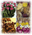 Decoration Purpose (Dried Flower)