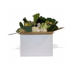 Vegetable Export Boxes