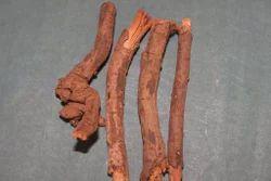Chitrakmool (Plumbago Zeylanica)