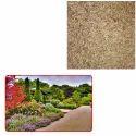 Grass Seeds for Garden