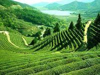 Darjeeling, Gangtok, Pelling