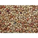 Sprouted Horse Gram Powder