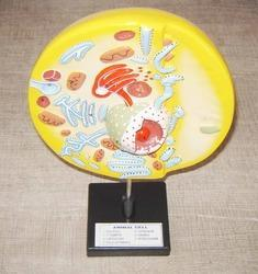 Animal Cell Model On Stand