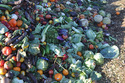Fruits and Vegetable Waste Management