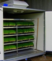 Hydroponic Cattle Feed System
