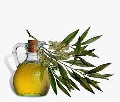 Tea Tree Essential  Oil as Per BP/USP