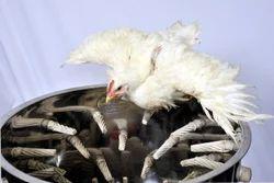 Chicken Slaughtering Machine
