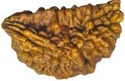 Puja Accessories Rudraksha