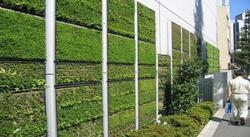 green living wall development service