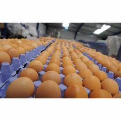 Eggzyme PL - Fungal Phospholipase A2