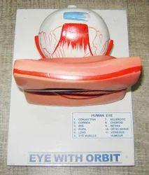 Human Eye Model on Board