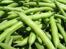 Organic French Bean