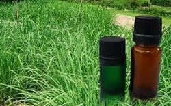 Citronella Essential Oil Pure And Natural Certified