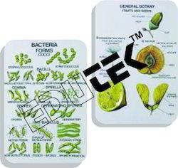 Botany Series I