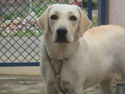 Dog Breeds In India And Their Prices