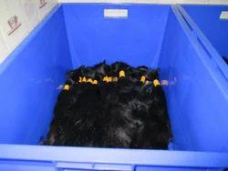 chennai human hair