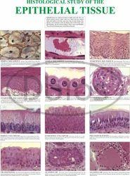 Histology Chart
