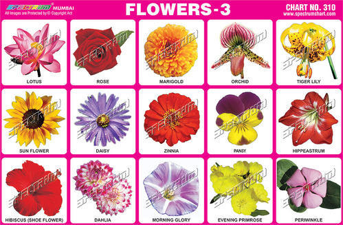 All Flowers Name In English Hindi Flowers Healthy