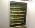 Green Fodder System
