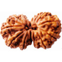 Gauri Shankar Rudraksha