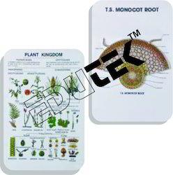 Botany Series III
