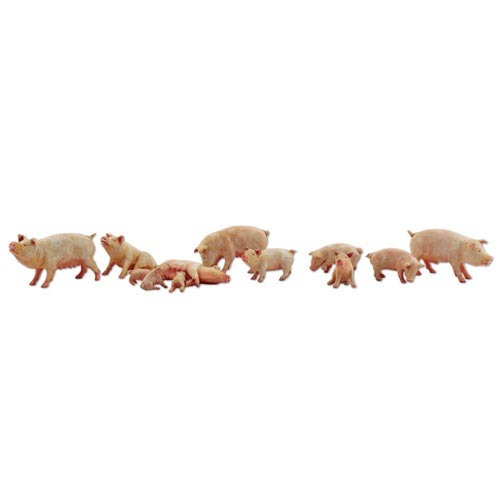 Pig Farm Feed