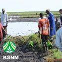 Tnau Paddy Rice Seeder