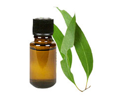 Eucalyptus Oil Terpenes