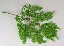 Moringa+Leaves