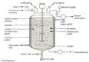 Fermentor Bioreactor - Design