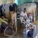 Automatic Milking M...