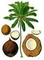 Pattath Agro Group