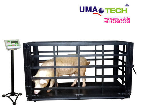 Specialized Large Animal Weighing Scales Pig Weighing