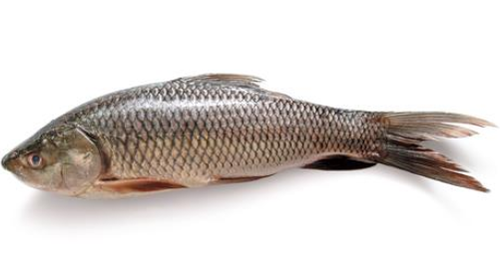 Hilsa Fish Surmai And King Fish Retailer From Mumbai