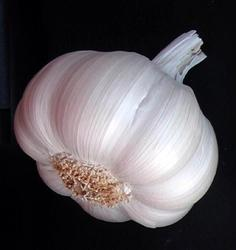 Globe Garlic