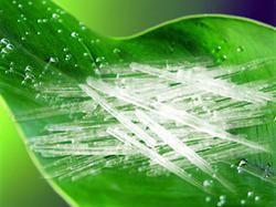 Menthol Crystals Small(99.3% Min)