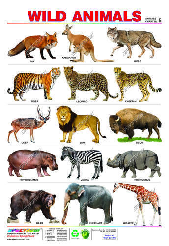 wild animal essay in english Many kinds of tigers are endangered animals: there are nine different types of tigers as well as fund research for ways to help that animal thrive in the wild.