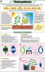 Photosynthesis For Botany Chart