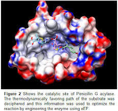 Immobilised Enzymes for Cephalexin