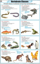 Vertebrate Classes For Zoology Chart