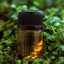 Mentha Citrata Oil Peppermint Oil Ex Mentha Arvenesis