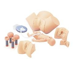Midwifery Models